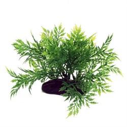 ArtUniq Bolbitis 10-12 - Искусственное растение Болбитис, 10-12 см - фото 18492