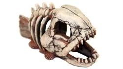 Deksi - Скелет рыбы №901 - 22х14х11 см - фото 18621