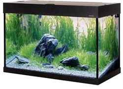 Aquaplus PRO 170 литров (цвет-венге) - аквариум, спроектированный специально для выращивания растений (без тумбы)