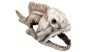 Deksi - Скелет рыбы №904 - 44х20х17 см