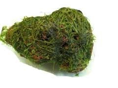 Dennerle Мох яванский на камушке - растение для аквариума