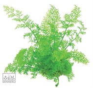 Dennerle Папоротник индийский водяной - растение для аквариума