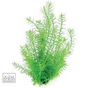Dennerle Ротала зеленая - растение для аквариума