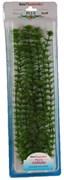Tetra Ambulia 38 см - растение для аквариума