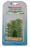Tetra Ambulia 5 см - растения для аквариума
