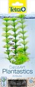 Tetra Ambulia S - 15 см - растение для аквариума