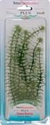 Tetra Anacharis 23 см - растение для аквариума