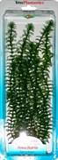 Tetra Anacharis 30 см - растение для аквариума
