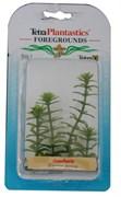 Tetra Anacharis 5 см - растение для аквариума