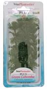 Tetra Green Cabomba 15 см - растение для аквариума