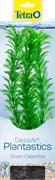 Tetra Green Cabomba 30 см - растение для аквариума