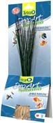 Tetra Hairgrass M (24 см) - декоративное искусственное растение