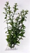 Tetra Hygrophila 30 см - растение для аквариума
