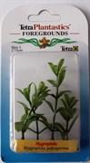 Tetra Hygrophila 5 см - растение для аквариума