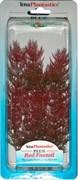 Tetra Red Foxtail 23 см - растение для аквариума