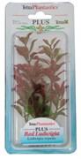 Tetra Red Ludwigia 15 см - растение для аквариума