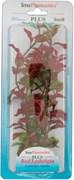 Tetra Red Ludwigia 23 см - растение для аквариума