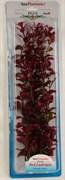 Tetra Red Ludwigia 38 см - растение для аквариума