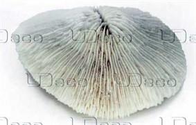 UDeco Disk Coral L - Коралл дисковидный большого размера для оформления аквариумов, 1 шт.