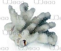 UDeco Finger Coral S - Коралл пальчиковый маленького рамера для оформления аквариумов, 1 шт.