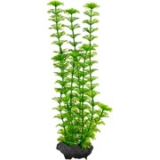 Tetra Ambulia 25 см - растение для аквариума