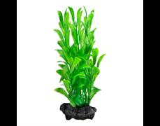 Tetra Hygrophila 23 см - растение для аквариума