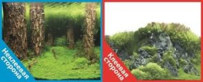 Фон двусторонний 60x30см с одной самоклеящейся стороной Затопленный лес(/Камни с растениями (СК)