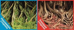 Фон двусторонний 100x50см с одной самоклеящейся стороной Корни со мхом/Корни с листьями (СК)