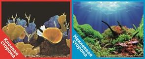 Фон двусторонний 100x50см с одной самоклеящейся стороной Морские кораллы (СК)/Подводный мир